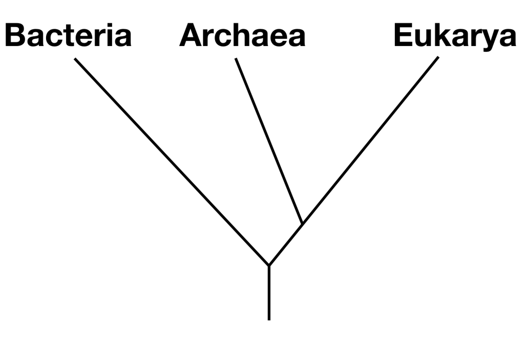 Text Box:   Phylogenetic tree showing relationships of the three Domains